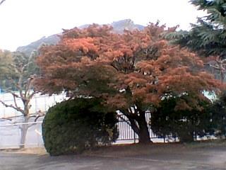 20101123d.jpg