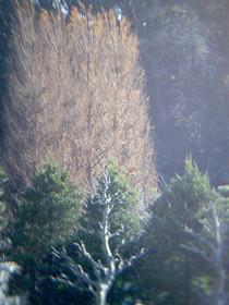 20101231a2.jpg