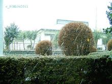 20110211c2.jpg
